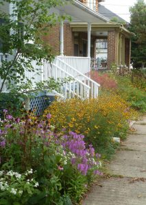 Native Plant Border