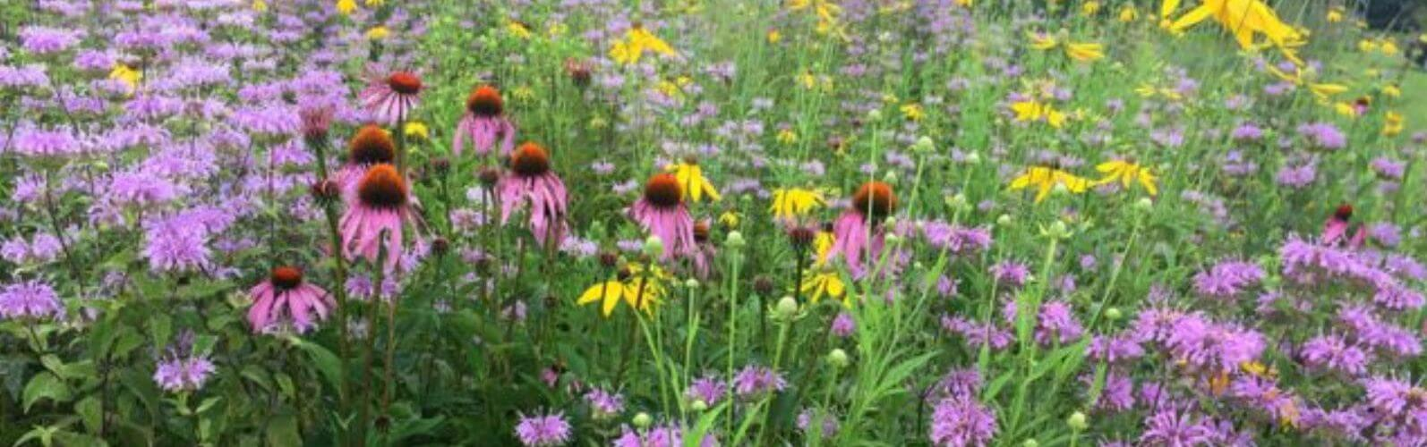 Native Plant Starter Kits