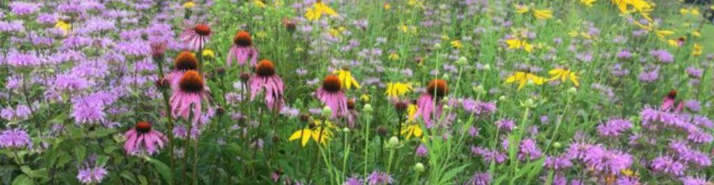 Pollinator Patch Starter Kits Now Available!