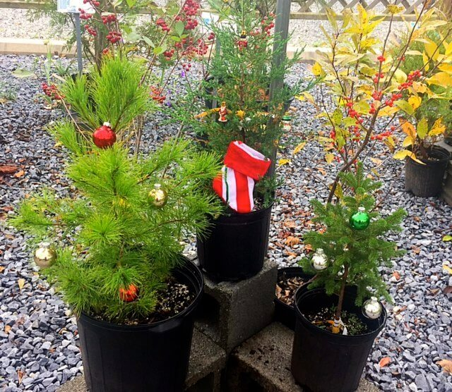 Gift Cards and Container Christmas Trees Available