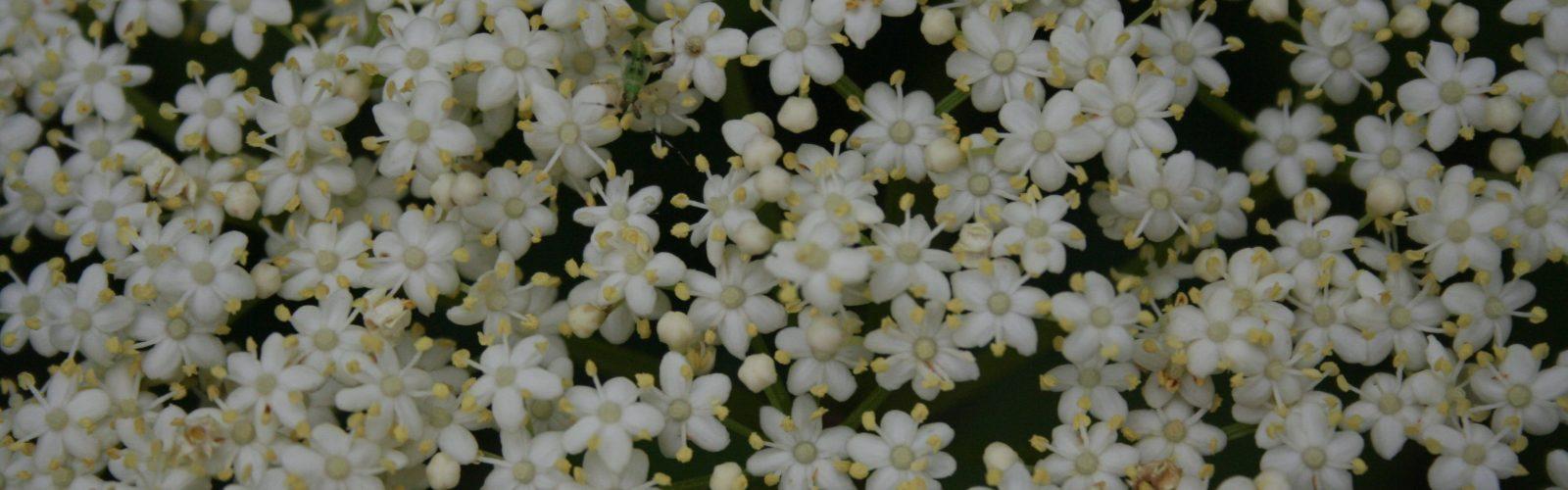 Celebrate Pollinator Week With Us