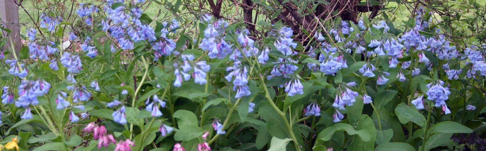 Thinking of Spring: The Spring Ephemerals