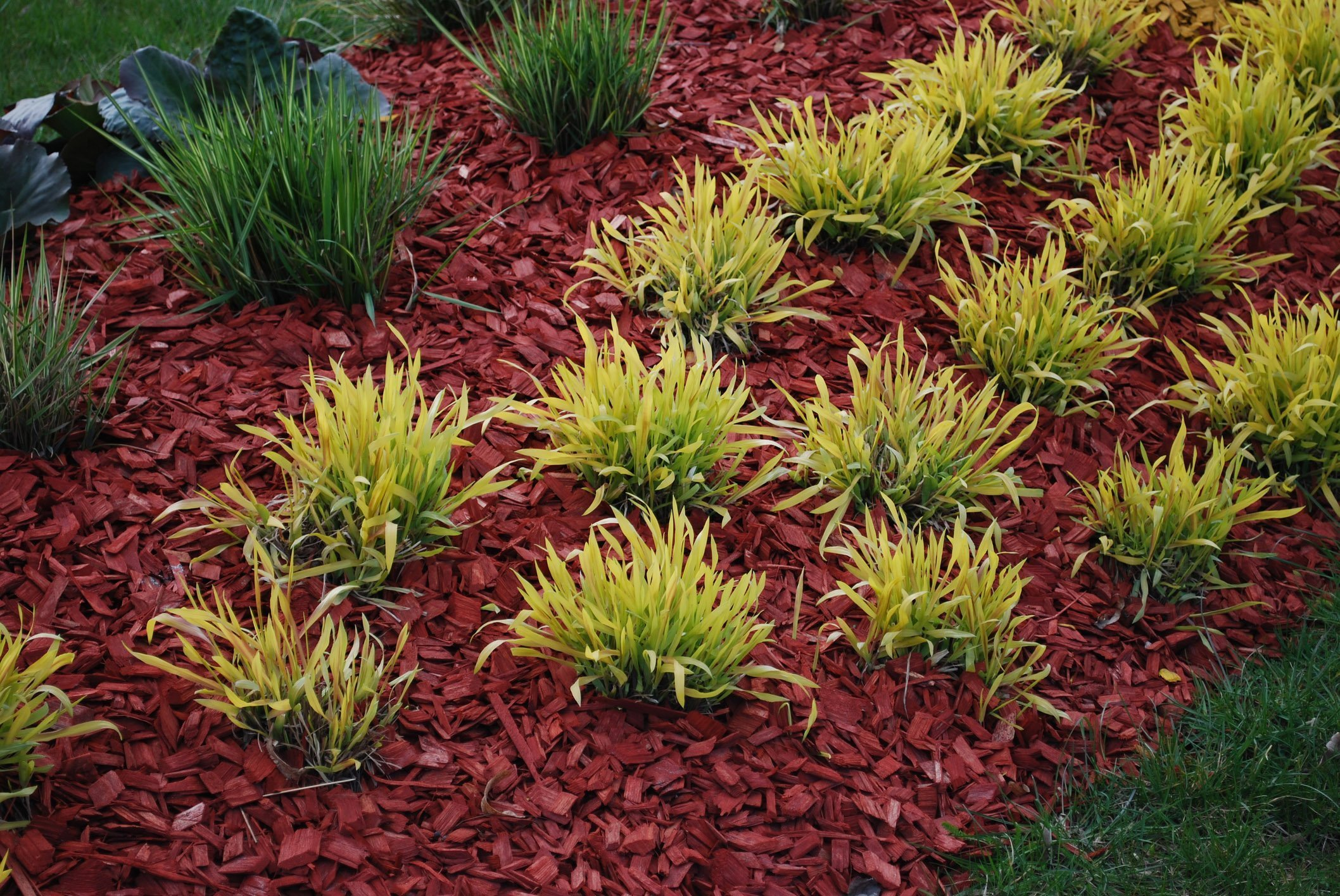 Living Mulch Part One An Ecological Alternative To Wood Mulch