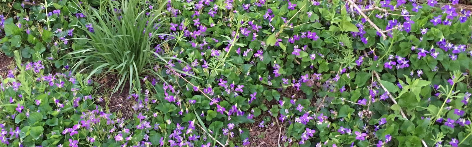 Living Mulch (Part Two) – Species Suggestions