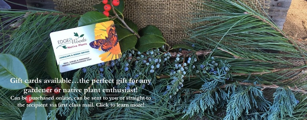Give the Gift of Natural Beauty with Native Plants