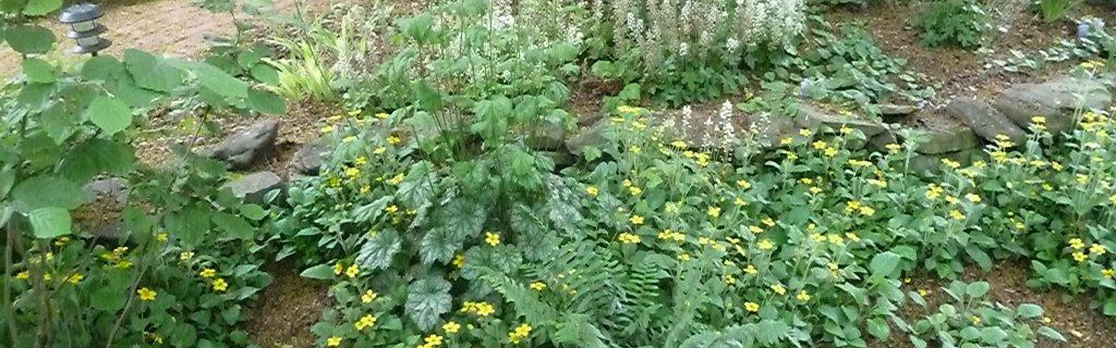 Living Mulch Part 3: Using Wood Mulch in the Landscape