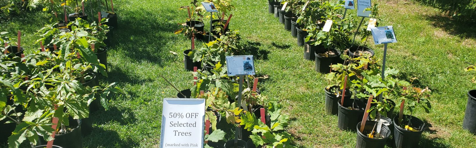 Sale on Select Oaks and Maples